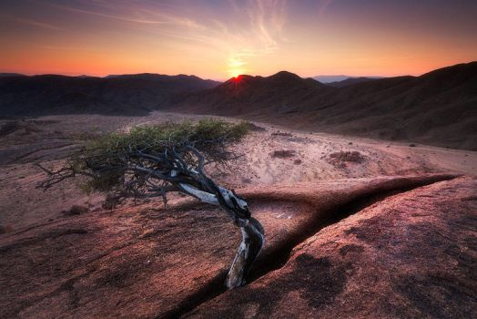 The Tree by hougaard