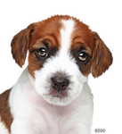 Puppy Png by DiZa-74