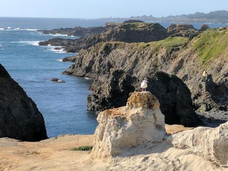 Mendocino Headlands, California by PamplemousseCeil