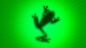 Wide frog wallpaper by LuisxOlavarria