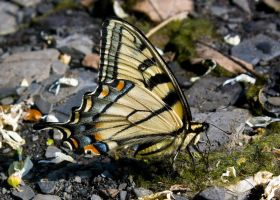Butterfly 2 by all121percent