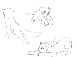Cat bases by AnnMY