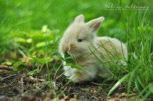 Rabbit Baby 2012 - 3 by Pebels