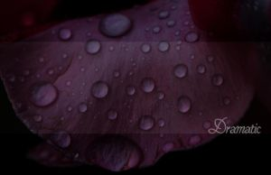 Dramatic by Silver-Dew-Drop