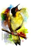 bird watercolour by rogercruz
