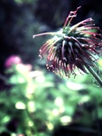 Photo - Flower Study25 by firstfear