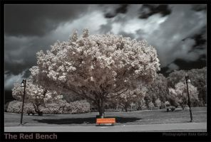 The Red Bench by RoieG