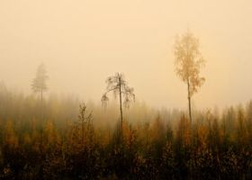 forest in autumn by KariLiimatainen