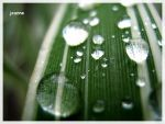 drops II by athousandmiles