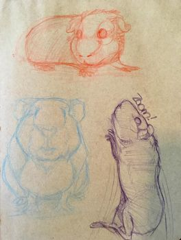 Guinea Pig Sketches by iMoiety