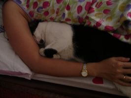 My laziest, cutest cat ever, Poo :x by EvaHuynh