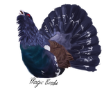 Capercaillie are cool (speedpaint) by MagicBirdie