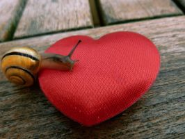 Mini snail got a big heart. by Leinzel