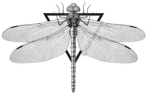 Dragonfly by Skirill