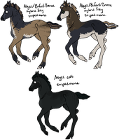 Abyss x Buford Bronze Foals by gyngercookie