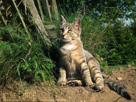 September Kitty by Andenne