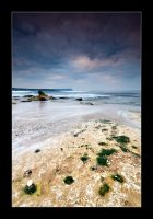Seaweed and Stones by henroben