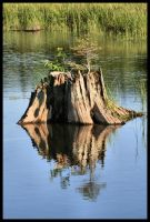 reflective stump by NOS2002