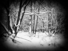 Winter woods by Carrie-AnneSevenfold