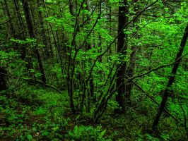 Sea of Green by KRHPhotography