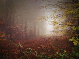 It's Autumn Time by Weissglut