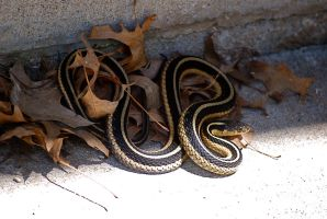 Coiled in Leaves by MNgreen
