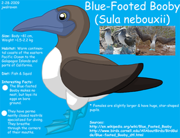 Blue-Footed Booby Info by JwalsShop
