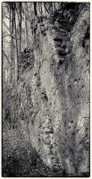 Trees and Stones 06 by HorstSchmier
