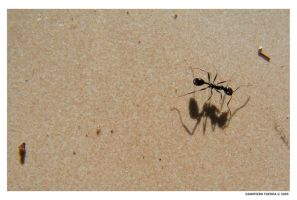 ant+shadow by gianf