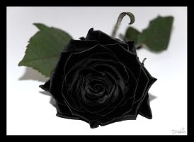 Velvet Black Rose by DreamSand