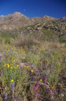 Mountains with Meadow Flowers by PatGoltz
