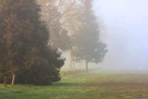 Foggy morning by CathleenTarawhiti