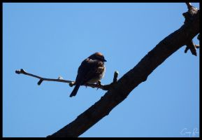 Partial Bird Silhouette. by Sparkle-Photography