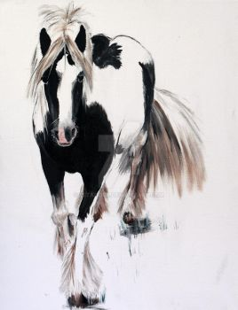 Gypsy Vanner by 1stAngel