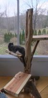 Cat tree by Devine-Escapes