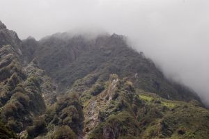 NZ Forrest mountain peaks with fog by Chunga-Stock
