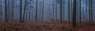 through the forest unknown by ArkanumTenebrae