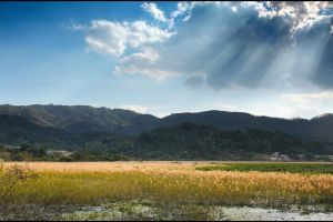 Crepuscular rays shining on reed field by johnchan