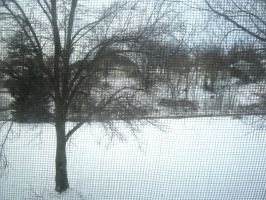 More Snow - January 30, 2010 by PharaohAtisLioness