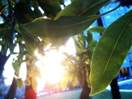the sun between two leaves by shikami