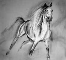 Horse doodle by Mndcntrl
