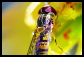 bee or no bee by fluentwater