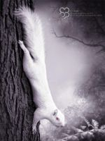 The White Squirrel by havizpm