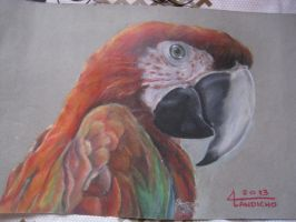 PARROT by avi3geyl