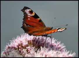 Butterfly1 by FrankAndCarySTOCK