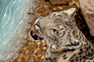 Snow Leopard by Snarflax