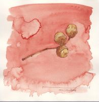 Watercolour: Acorn Twig by Hedgefairy