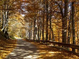 Golden Trees by cristilaceanu