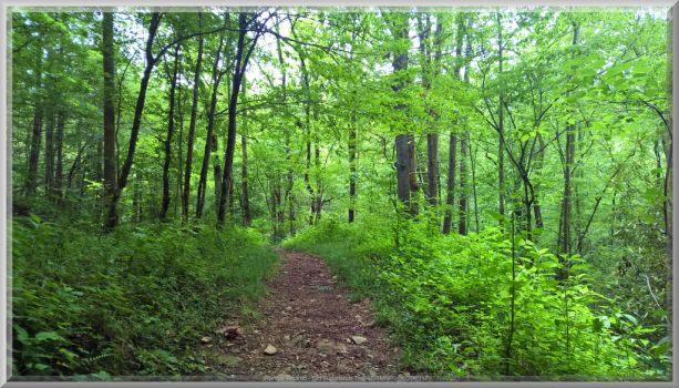 Old Sugarlands Trail Scenery 2 by slowdog294