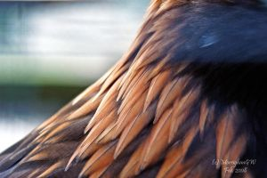 Golden Eagle Feather Detail I by MorrighanGW